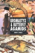 Uromastyx & Butterfly Agamids