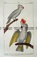 Antique Print 232-020 Birds - Australian parrots by Buffon c.1820 Birds