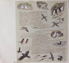 BEAUTIFUL VINTAGE BIRD PRINT ~ BIRDS STUDIES SEAGUL FALCON etc ~ TUNNICLIFFE