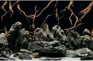 """24"""" / 60cm  Tall Height New Aquarium / Vivarium Background Poster Komodo Picture"""