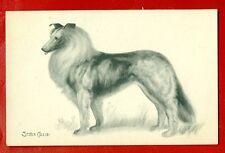 Dog Collie Vintage Photo Postcard 362