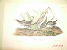 AUDUBON'S BIRDS of AMERICA - Plate 306 - SORA RAIL