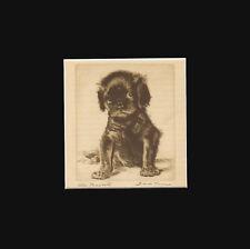Vintage Chaliver King Charles Dog, Sketch by Diana Thorne 1936 Matted Print 9x9
