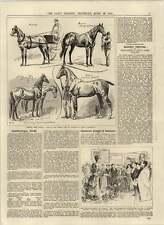 1892 CAVALLI CANADESE in Inghilterra voto delle donne rollit's Bill