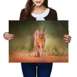 A2 | Caracal African Lynx Cat Animal - Size A2 Poster Print Photo Art Gift #3170