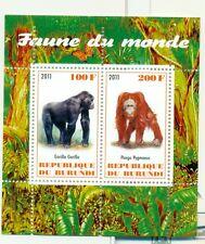 SCIMMIE - MONKEYS BURUNDI 2011