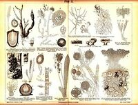 1898  Mushrooms Structure Pilze Грибы Original Antique Lithograph Print