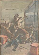 K0158 Tolosa - Tigri assalgono domatore - Stampa d'epoca - 1931 Old print