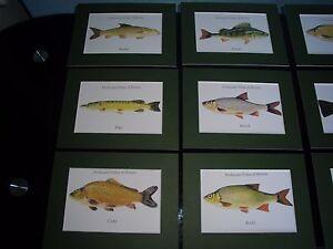 Freshwater Fish Mounted Print