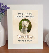 """West Highland White Terrier 10""""x8"""" Free Standing """"Westies Have Staff"""" Picture"""