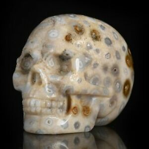 """1.93""""Natural Coral Fossil  Carved Skull Metaphysic Healing Power #33Q78"""