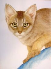 Original Pastel Drawing Abyssinian Cat Shorthair Porter Family Wildlife Art