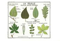 DIFFERENT LEAF TYPES POSTCARD - FRENCH LANGUAGE - LA FEUILLE - NEW & PERFECT