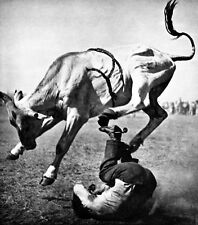 Bucking Bull Poster, Rodeo, Cowboy, Trampled, Texas 1930's