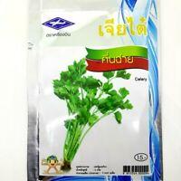 Chia Tai Thai Celery Seeds Vegetable Plant Garden Tropical Salad Food