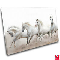 HORSES ANIMAL STALLION CANVAS Wall Art Picture Print