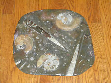 AMMONITE and ORTHOCERAS - FOSSILIZED CEPHALOPOD - POLISHED PLATE - 9.9 lbs