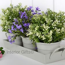 HERB POTS WITH WATER TRAY Herbs Plant Pot Windowsill Conservatory Plants Metal