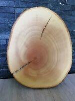 30 x 3 cm Baumscheibe Holzscheibe Esche