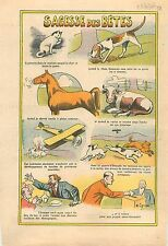 Caricature Antiparlementaire Chat Chien Cheval Vache Cat Dog Cow Horse Vote 1936