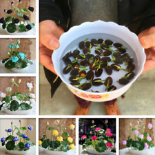Wholesale Plant Seeds Thai Sun Pepper Cherry Lotus Flower Garden Bonsai Plant