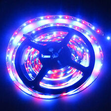 25M 5x 5M 3528 SMD RGB LED Strip Light 300 Leds 60Leds/M 12V DC Non-Waterproof