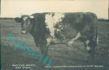 More details for cow pat the giant 220 stone mr f lockwood thornton le clay 1912 real photo