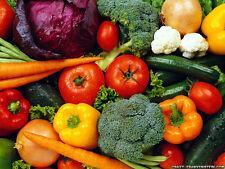 Guide to Home Vegetable Gardening American Gardener CD