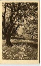 1930 Stempel BERN AK Blühender Baum Garten gelaufene AK