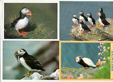 BRETAGNE lot 4 cartes postales oiseaux MACAREUX MOINE