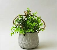Dry Horsetail Herb Plant Vase Decor Bouquet Green Dried Reed Grass