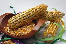 corn, REID'S YELLOW DENT cornmeal, 23 SEEDS! GroCo .