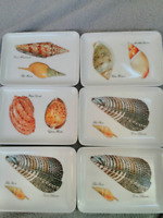 Vintage Small Mebel Set of 6 naturalist Shell collection Trays Made in Italy