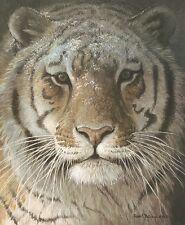 Tiger Portrait by Robert Bateman Art Print Wildlife Safari Poster 32x24