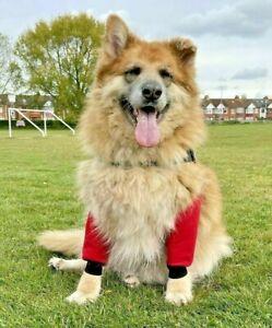 Dog Waterproof  Elbow Protectors, cuff ,Calluses,Joint pain,Arthritis hygromas.