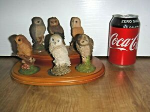 Royal Doulton Set Attractive Collectable 6 Small Owls On Wooden Stand