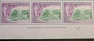 DOMINICA 1951 SG123 KGVI 3c. GREEN AND REDDISH VIOLET  -  MNH