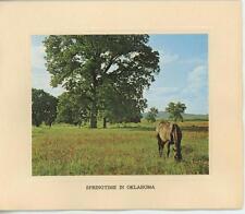 VINTAGE HORSE PASTURE SPRING OKLAHOMA FLOWERS US BLANK NOTE CARD PHOTO ART PRINT