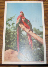 Macaws Tropical Bird Postcard Chicago Illinois Il Brookfield Zoo Zoological Park