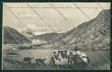 Aosta Gran San Bernardo Cane cartolina QQ5882