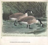 Schöne Vintage Vogel Aufdruck ~ Kanada Gänse