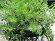 Garden Pond/Water Plant Floating Ring/Island - Holds 20cm pots. Fantastic idea