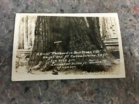 RPPC Real Photo Postcard of 2146 Year Old Redwood Tree