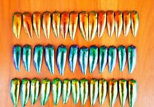 150 Green Blue Golden Red Jewel Elytra Beetle Wings Jewelry Supplies 50 Each