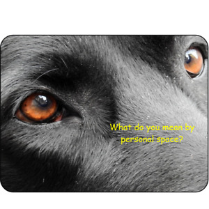 Labrador Novelty Sign fun dog humour Black Lab retriever Gundog