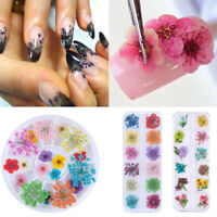 Real Dried Dry Flowers 3D Nail Art Decoration Design DIY Tips  12 Colors
