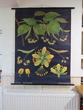 VINTAGE PULL DOWN SCHOOL WALL CHART LINDEN LIME BOTANICAL JUNG KOCH QUENTELL