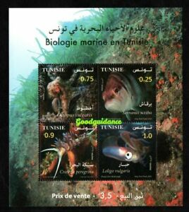2021 - Tunisia - Marine biology in Tunisia - Fishes - Perforated block - MNH**