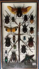 REAL EXOTIC HUGH 19 INSECT DISPLAY SPIDER TAXIDERMY ENTOMOLOGY BEETLE INSECTS