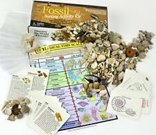 Fossil Collection Sorting Activity Kit ,over 100 Pcs (20 different fossil types)